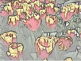Tulips effect 3