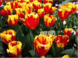 Tulips effect 5