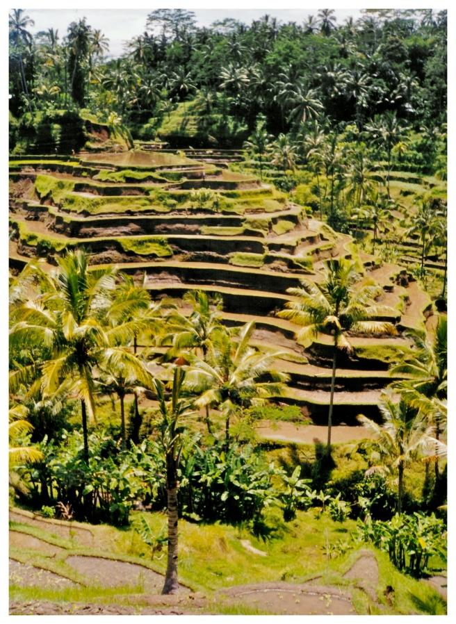 Bali Terraces 1
