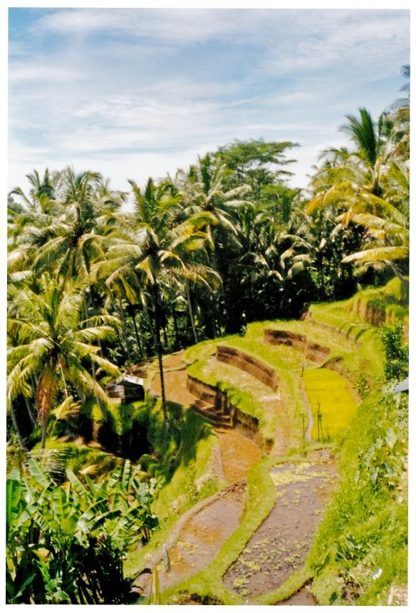 Bali Terraces 2